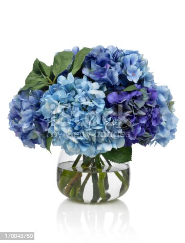 An all blue bouquet of hydrangeas in a glass vase. Shot against a bright white background. There is a path which may be used to delete the reflection if desired. Extremely high quality faux flowers.