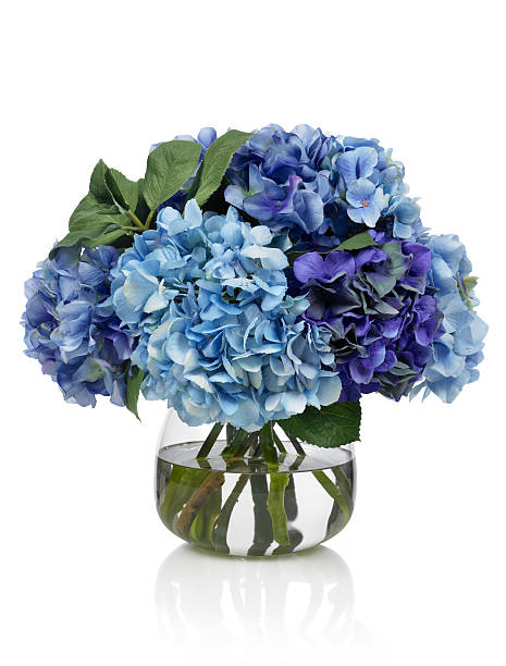 Blue hydrangea bouquet on white background stock photo