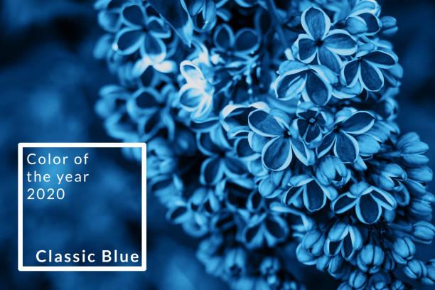 Blaue Hortensieblume – Foto