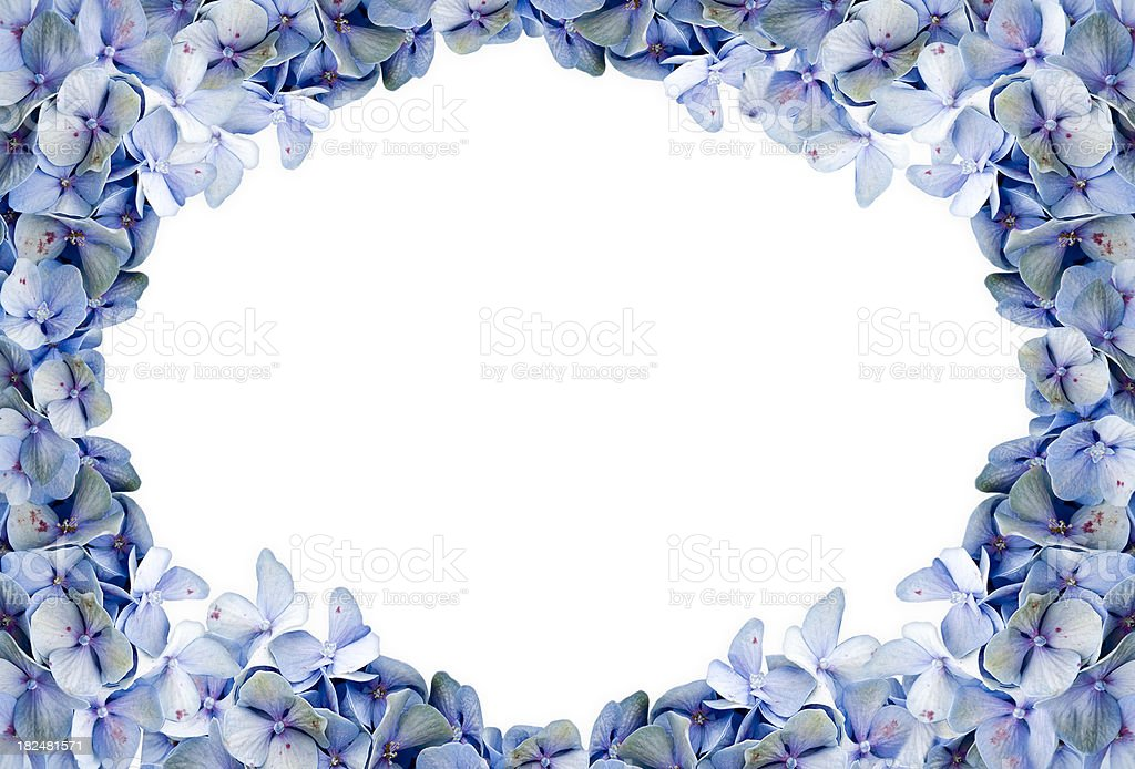 Blue Hydrangea Framed Background royalty-free stock photo