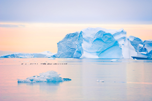 Blue icebergs in Atlantic ocean at sunset in Saqqaq village, western Greenland. Flock of ducks flowing on the water among icebergs.