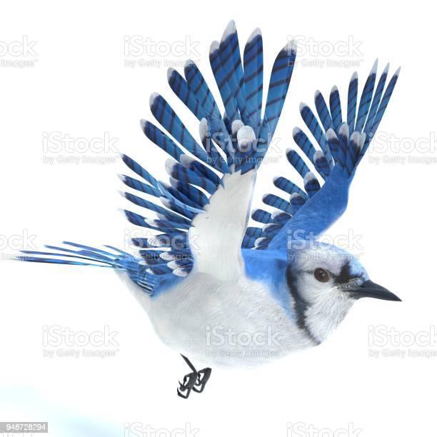 Blue jay picture id948728294?b=1&k=6&m=948728294&s=612x612&h=h0ua6rr6s0ehiuk kxw7dnwrb8fgbbkzwh25 wbegim=