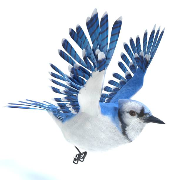 Blue jay picture id948728294?b=1&k=6&m=948728294&s=612x612&w=0&h=bcjcsz703fybiwy74dlloz8urjop3a iiygrjw6lpi0=