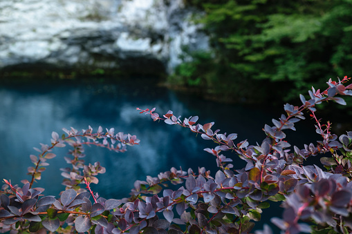 istock Blue lake in Abkhazia 922760048