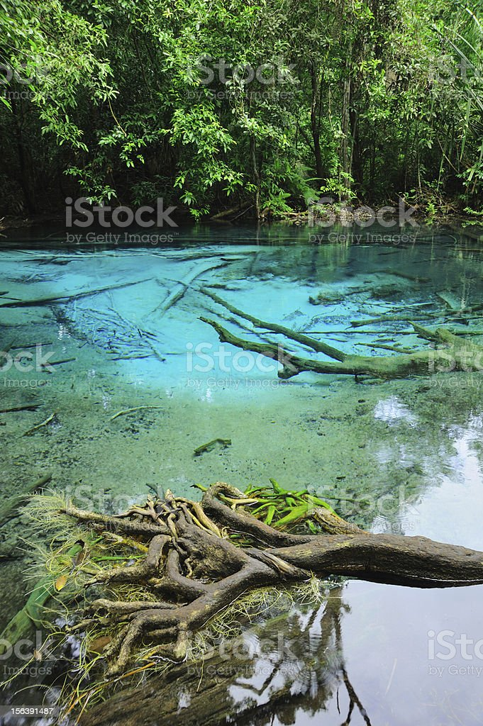 Blue Lake in Deep Forest royalty-free stock photo