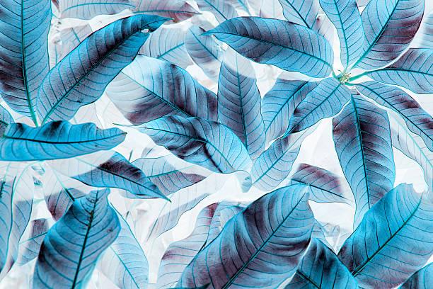 blue leaf pattern on the surface on white - blumendrucktapete stock-fotos und bilder