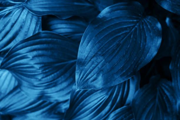 Blaue Blätter Textur – Foto