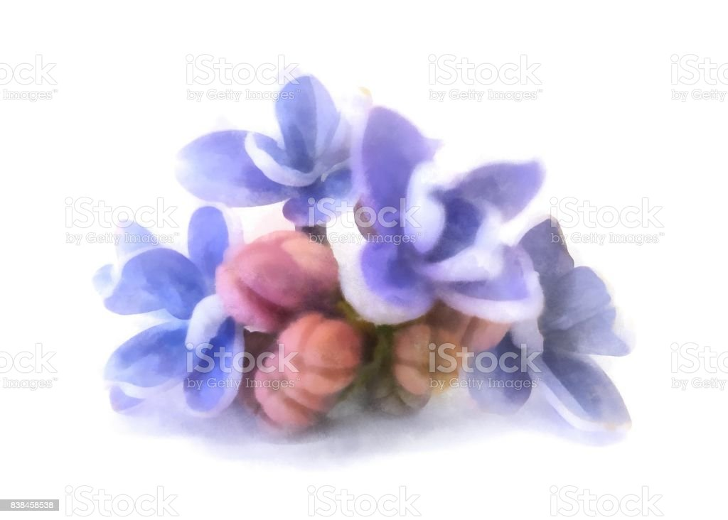 blue lilac oil draw perspective, paint fresh delicate flowers and petals, isolated on white background stock photo