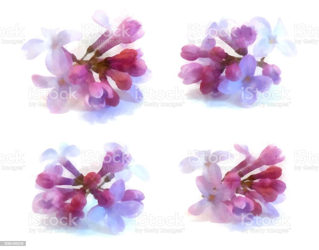 blue lilac watercolor draw perspective, paint fresh delicate flowers and petals set , isolated on white background stock photo
