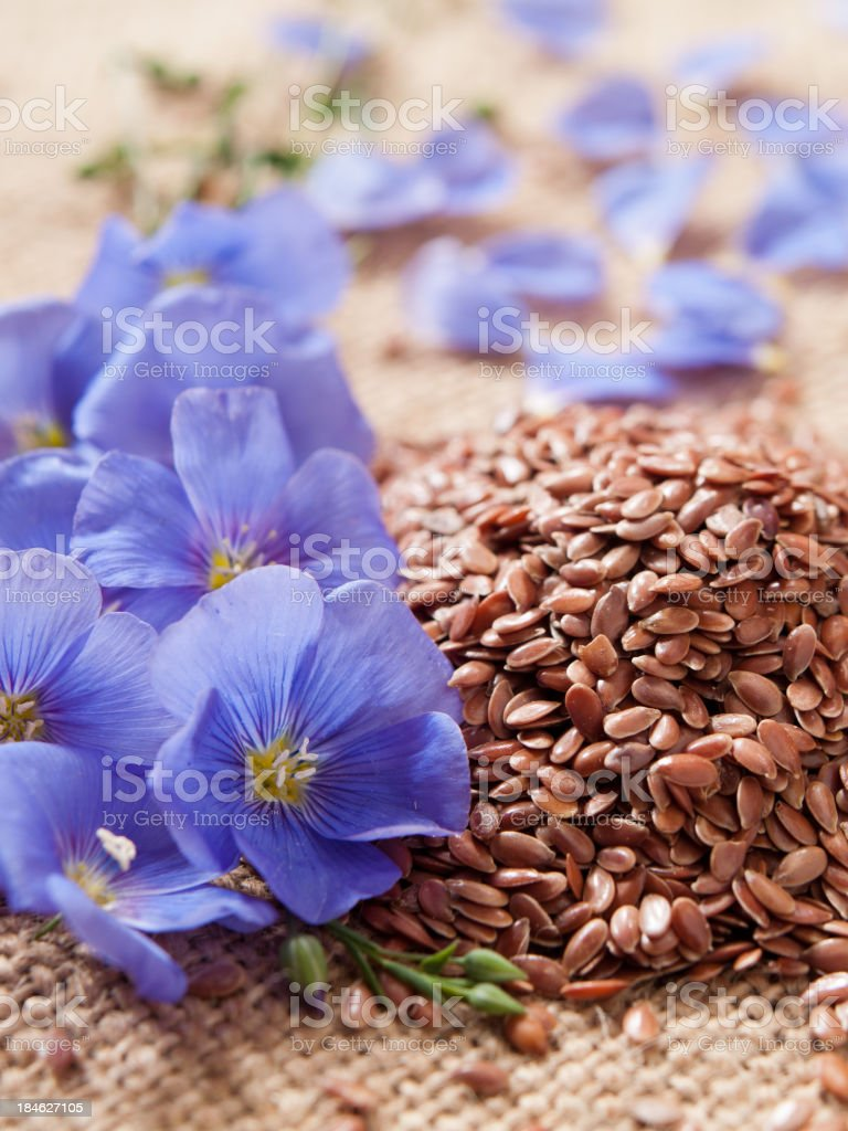 blue lin blooms and linseed on coarsely woven cloth royalty-free stock photo