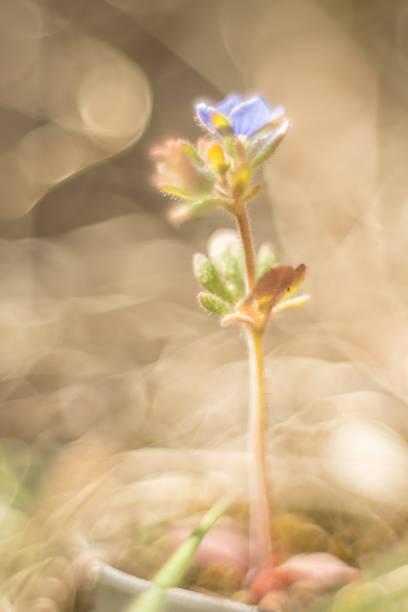 niebieski kwiat makro na abstrakcyjnym tle – zdjęcie