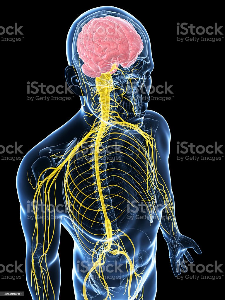 3d Blue Man With The Nervous System Highlighted In Yellow Stock