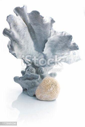 blue marine coral against white refelctive background