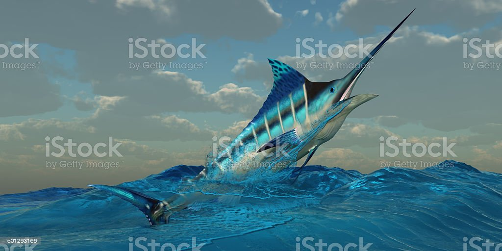 Blue Marlin Burst The Blue Marlin is a predator and is a favorite game fish with deep sea anglers. 2015 Stock Photo