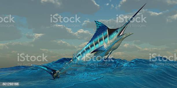 Blue Marlin Burst Stock Photo - Download Image Now