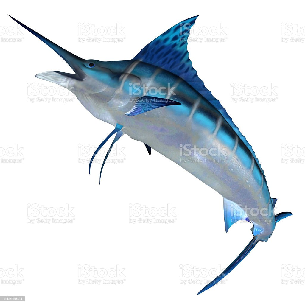 Blue Marlin Front Profile stock photo
