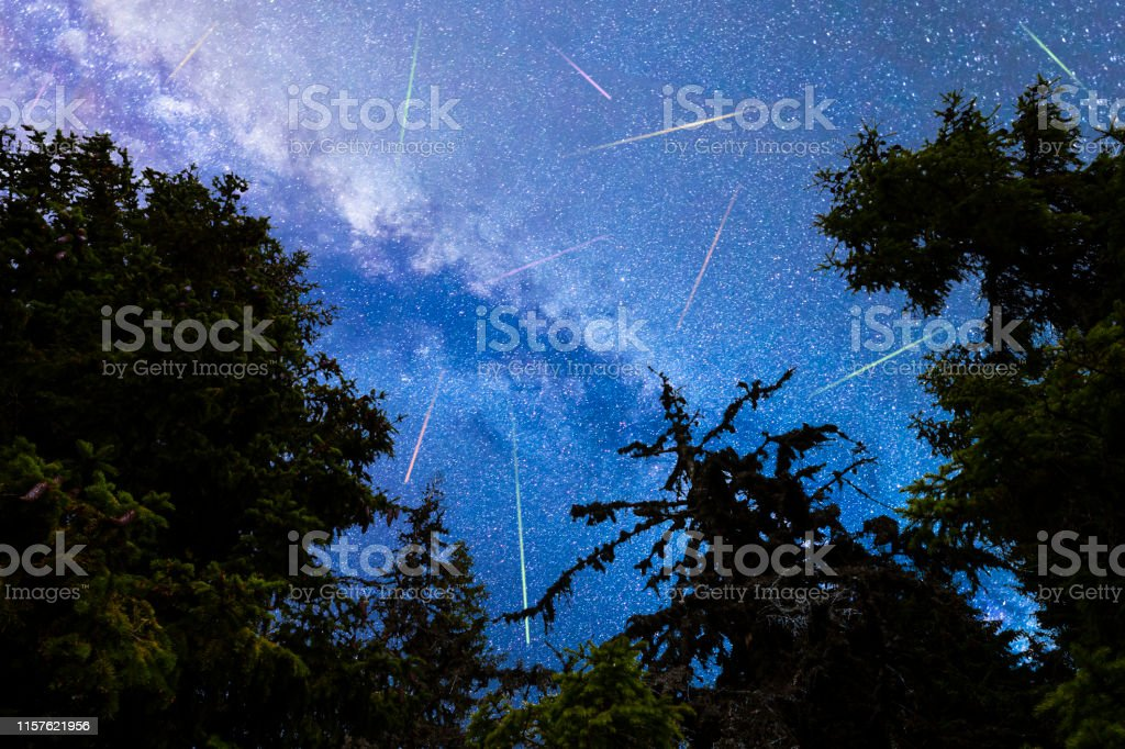 A view of the stars of the blue Milky Way with pine trees forest...