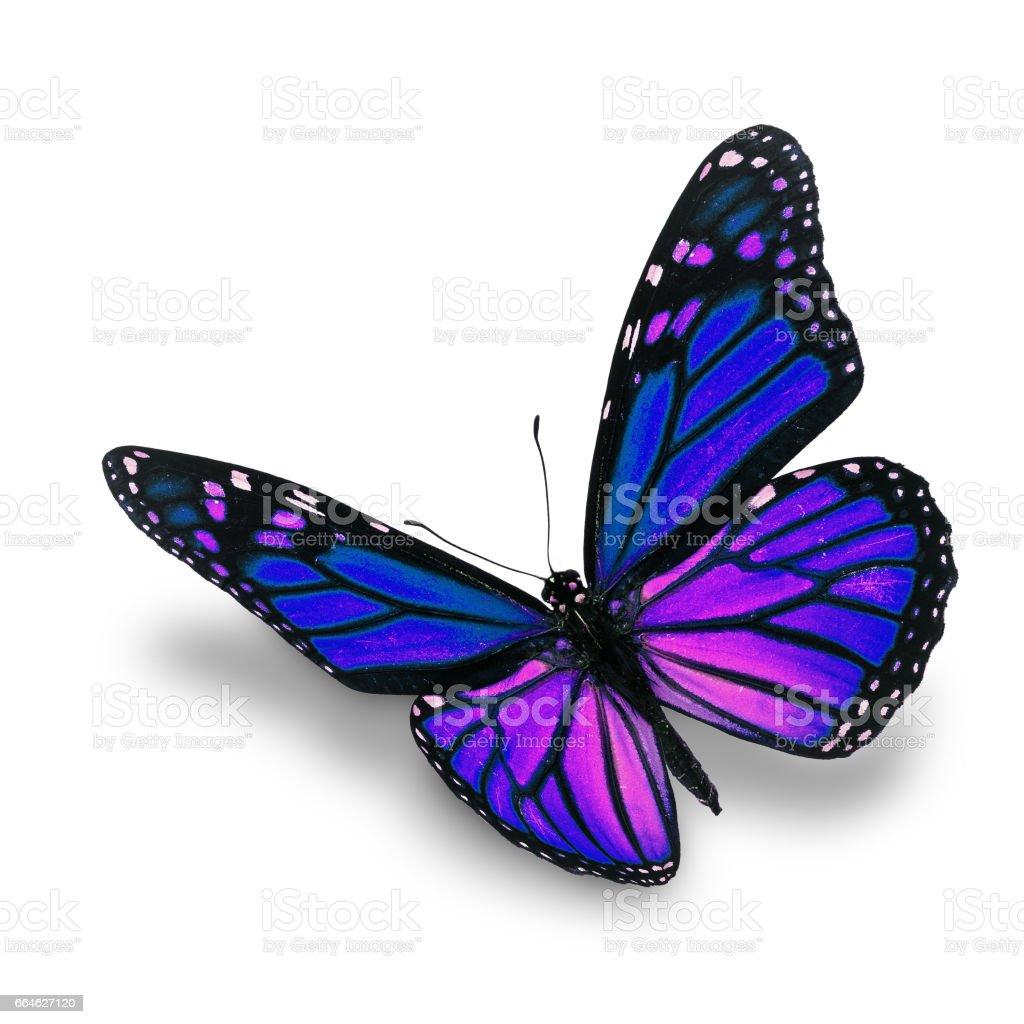 Fotografía de Mariposa Monarca Azul y más banco de imágenes de ...
