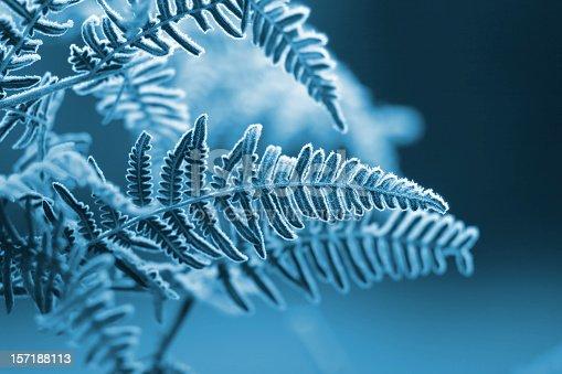 Frozen fern with blue filter