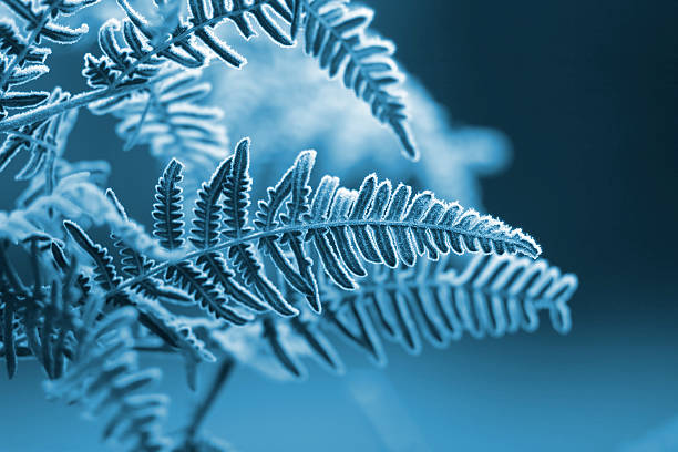 a blue monochromatic photo of frozen fern leaves - ice crystal stock pictures, royalty-free photos & images