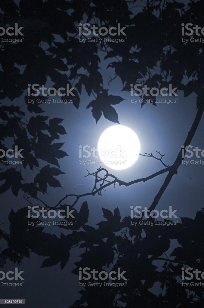 Blue Moon 1 royalty-free stock photo