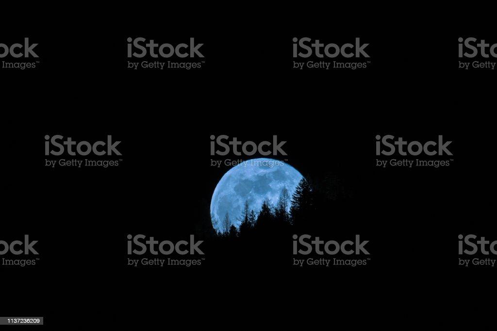 Moon and trees at night