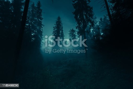 Blue moonlight through the spruce trees in dark magic mystery night foggy forest. Halloween backdrop.