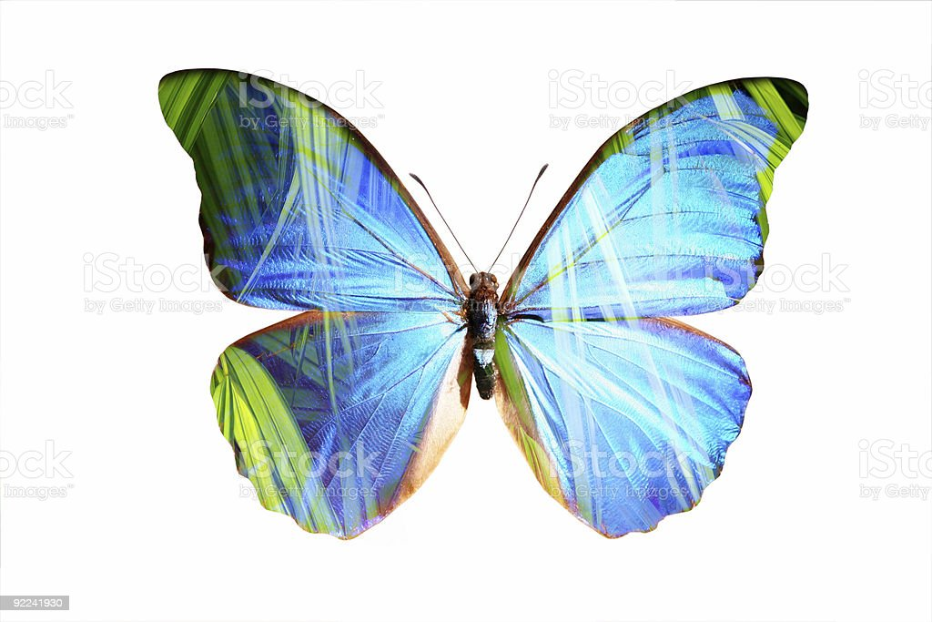 Blue Morpho 2 royalty-free stock photo