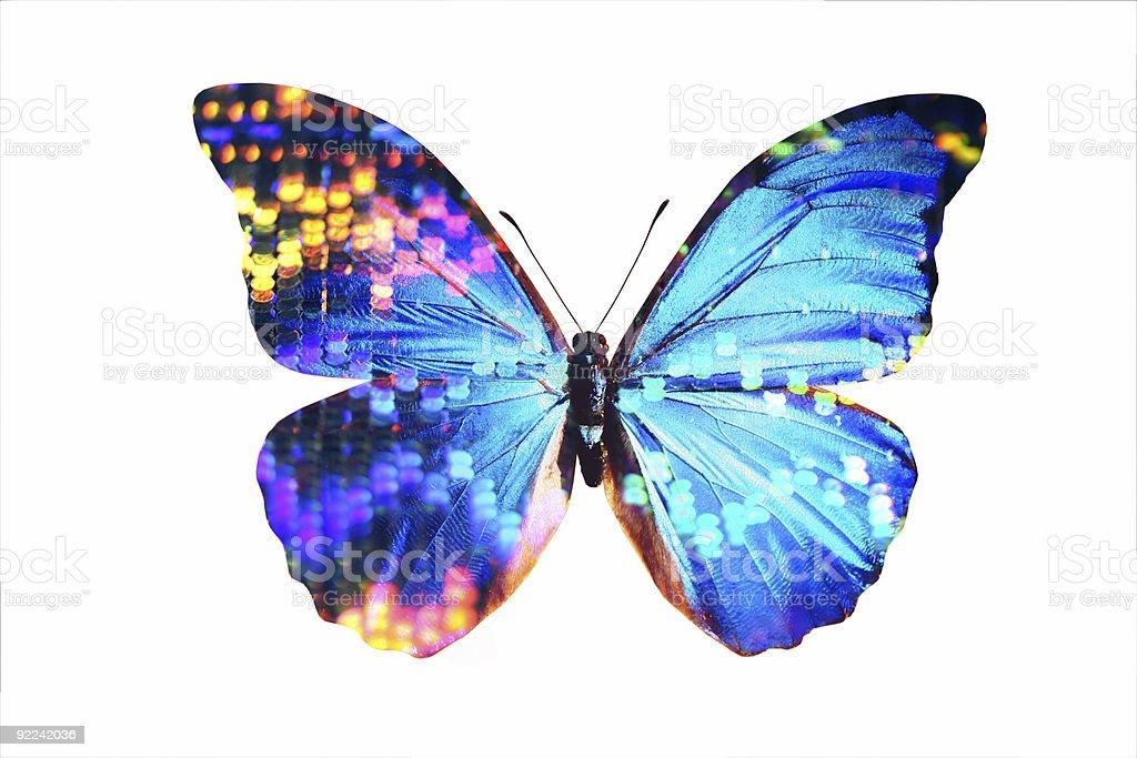Morpho azul 4 - foto de acervo