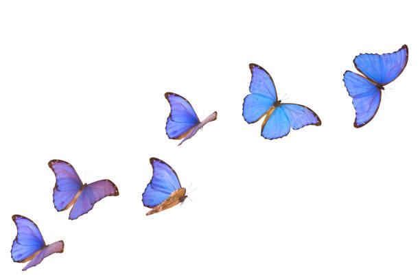 Blue morpho butterfly banner picture id154933494?b=1&k=6&m=154933494&s=612x612&w=0&h=5detjz6wcfsalqhesg ede5ulz18 y mwhwk5krzdx4=