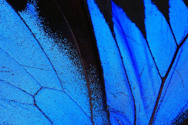 Blue morpho butterfly wing macro close up picture id182379018?b=1&k=6&m=182379018&s=612x612&w=0&h=pzw0r0fz6r1q9otxs3s2aoky97yg1fllhrxzl844nik=