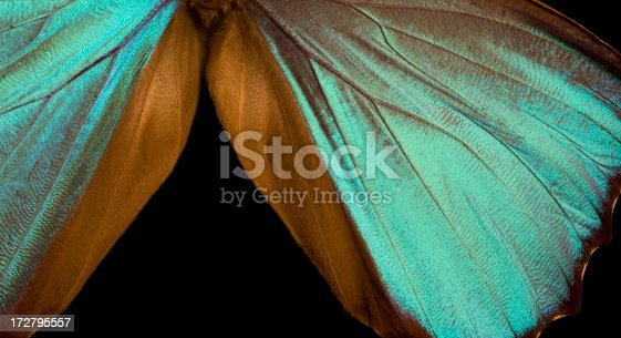 istock Blue Morpho Wing Macro Close-up 172795557