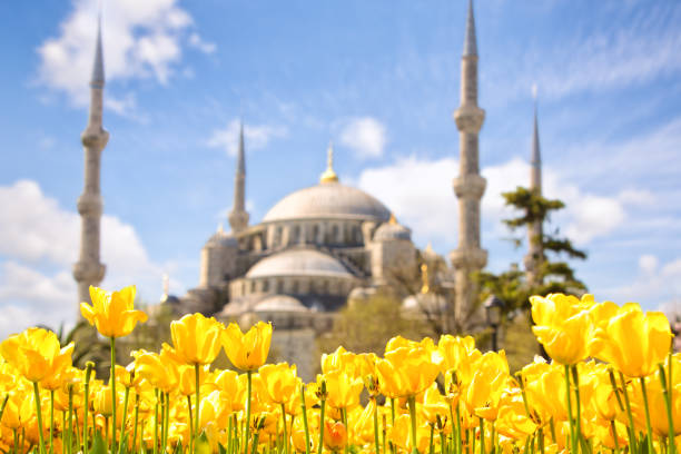 Blue Mosque and Tulip Festival stock photo