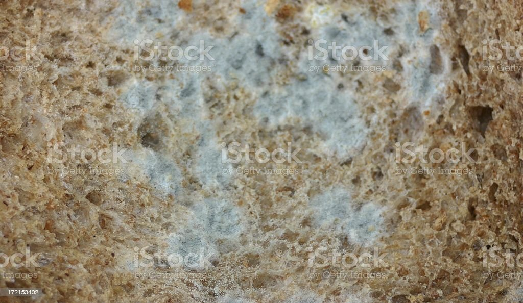 blue mould royalty-free stock photo