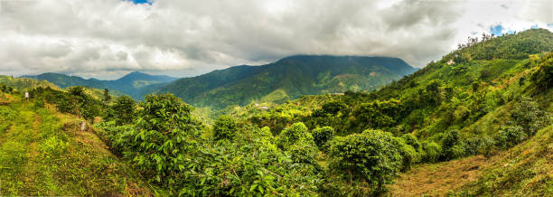 Blue mountains of Jamaica coffee growth place stock photo
