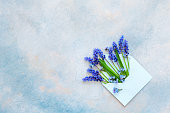 Blue muscari flowers in the blue paper envelope on the sky blue background