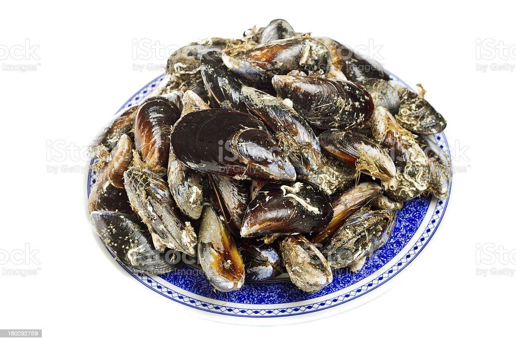 blue mussel bivalve royalty-free stock photo
