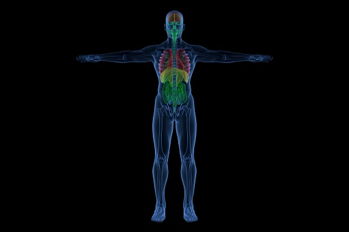 Blue neon outline of the male human body with sceleton and internal organ