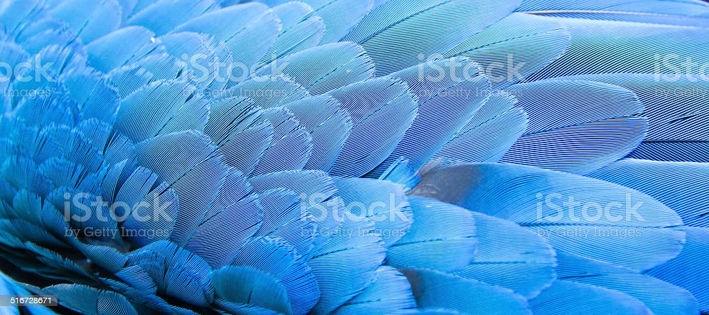 Blue of Macaw feather stock photo