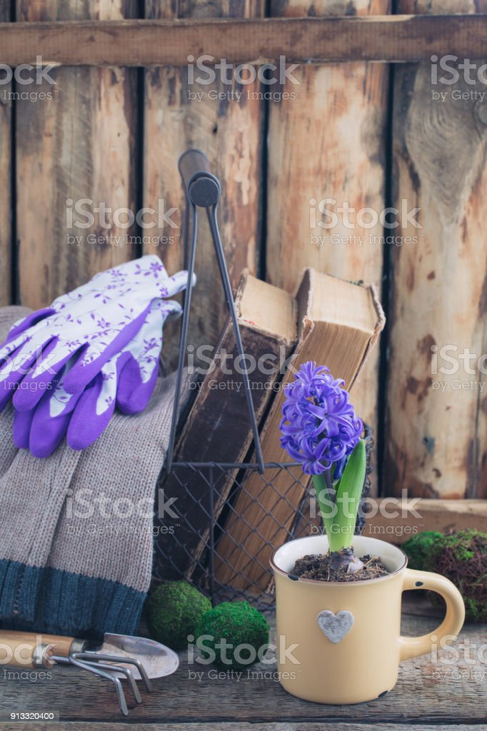 Blue or violet spring hyacinth in the cup over old books with handmade knitted sweater. Easter postcard concept. stock photo