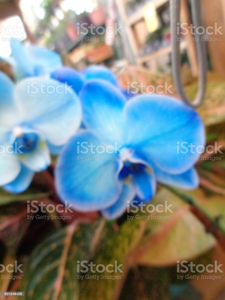 Blue Orchid Flower Stock Photo More Pictures Of Animal Family Istock