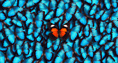 Blue Panoramic Butterfly Background