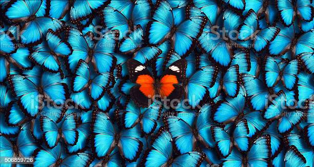 Blue panoramic butterfly background picture id506859726?b=1&k=6&m=506859726&s=612x612&h=ynfsjivy0nxtcnxatre0v4tkvej4shtcdvyypikbsxi=