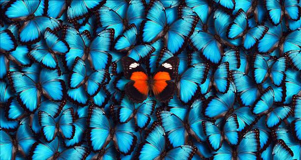blue panorama schmetterling hintergrund - individualität stock-fotos und bilder