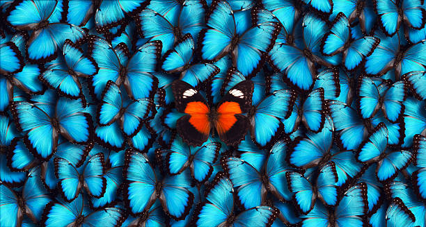 blue panoramic butterfly background - animal markings stock photos and pictures
