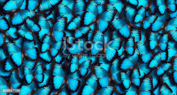 istock Blue Panoramic Butterfly Background 509867198