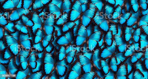 Blue panoramic butterfly background picture id509867198?b=1&k=6&m=509867198&s=612x612&h=gbcipko3vemus4umkalqkr hhwqifkng4lubaim7gf4=
