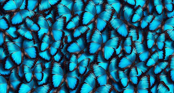 Blue panoramic butterfly background picture id509867198?b=1&k=6&m=509867198&s=612x612&w=0&h=mtwqmemdmctygr4fiwzpdhlae jff20ocmi qhzq15w=