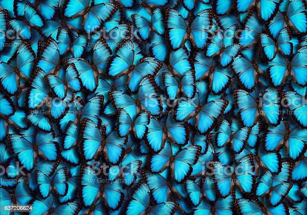 Blue panoramic butterfly background picture id637206624?b=1&k=6&m=637206624&s=612x612&h=ekq7oofyyconjtpzrdgbq0tu ukelz3wq 1gcmbfla8=