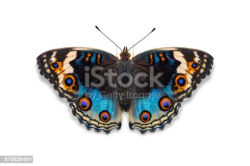 istock Blue pansy butterfly 876638484